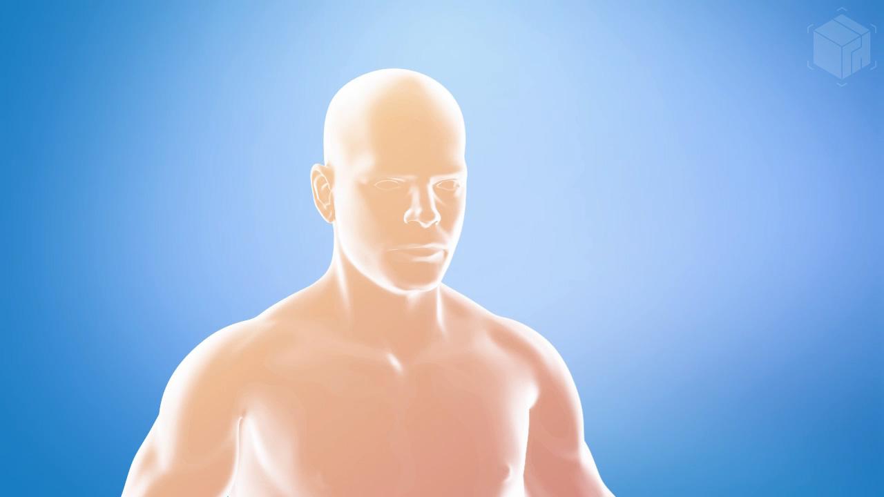 Medical Visualization - Intake Animation